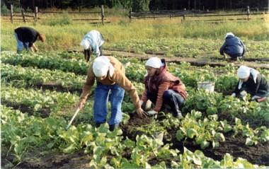 Календарь работ в саду и огороде